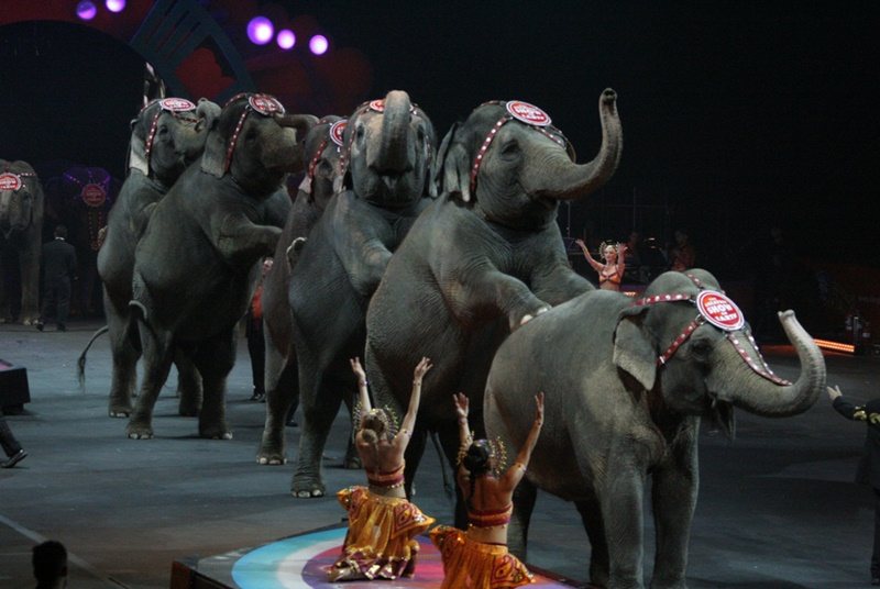 "Photo by Nazim Uddin: ""Elephants and Dancers"""